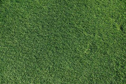 care for a bermuda lawn