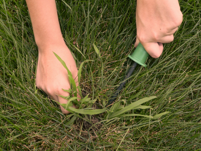 Natural Way To Rid Lawn Of Weeds And Dandelions