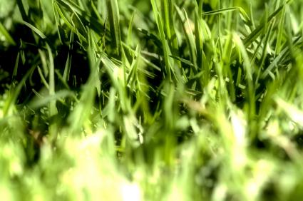 Preventing Crabgrass Crabgrass Prevention Tips