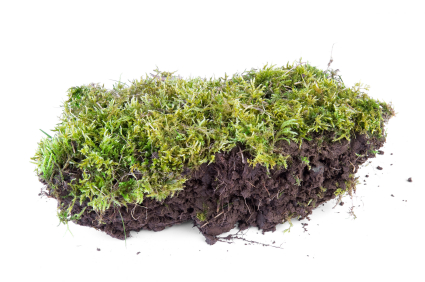 controlling lawn moss