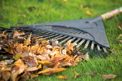 Raking Leaves Fall Clean Up Minneapolis
