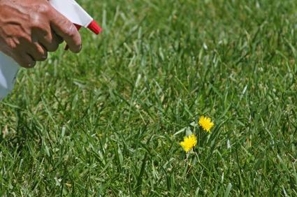 organic weed killing tips