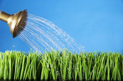 how to water the grass